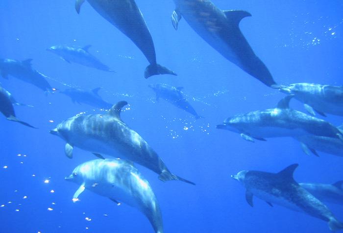 azores faial 1 - Azores, nueve islas, nueve mundos por descubrir
