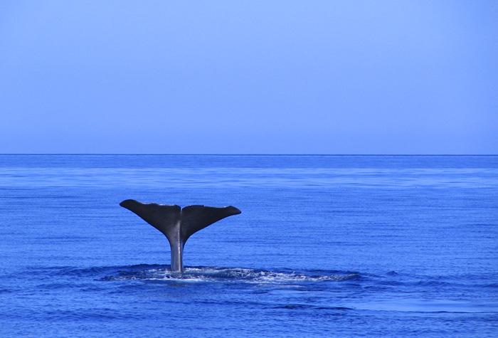 azores pico3 1 - Azores, nueve islas, nueve mundos por descubrir