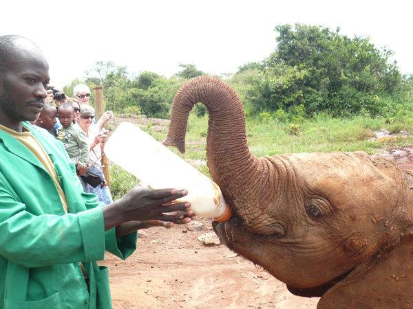 Orfanato de elefantes kenia