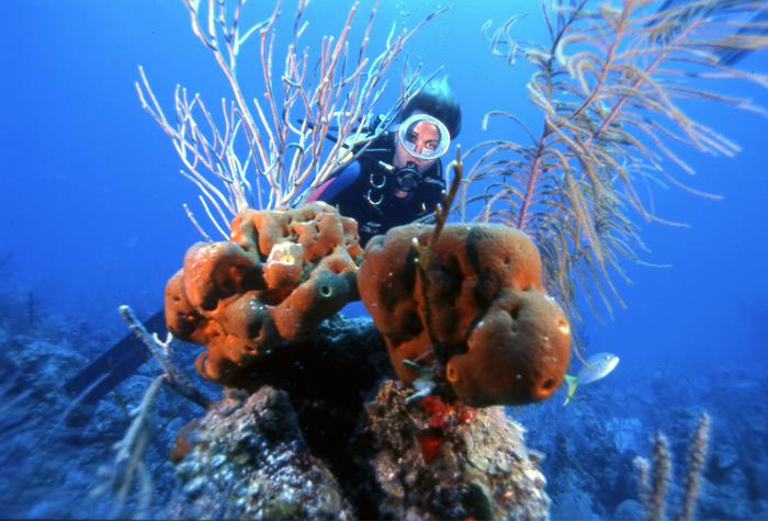 Cayos de Villa Clara bajo mar 1 - Cayos de Villa Clara, un lujo natural casi desconocido