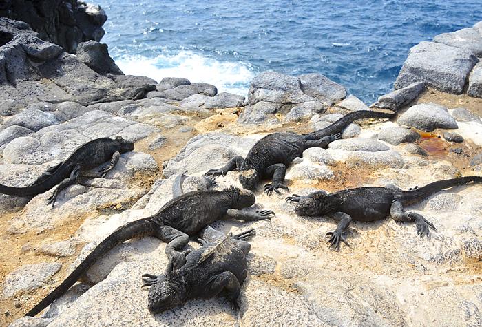 Galapagos reptiles 1 - Galápagos, simplemente natural y espectácular