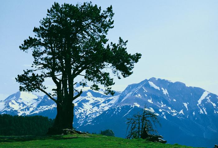 Valle de sorteny 1 - Andorra, pequeño y majestuoso gigante verde