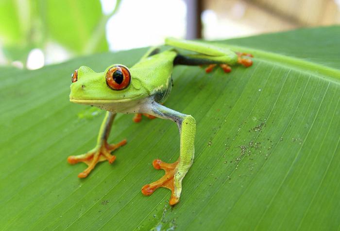 costa rica animales 1 - Costa Rica, la cuna de los tesoros naturales