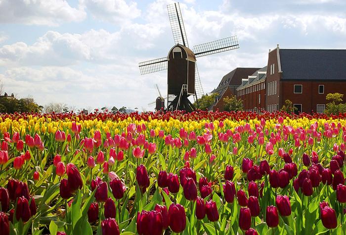 holanda paisaje tulipanes