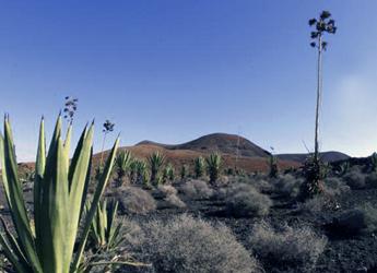 la oliva desierto