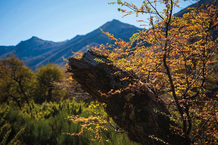 maravillas naturales de Junín de los Andes