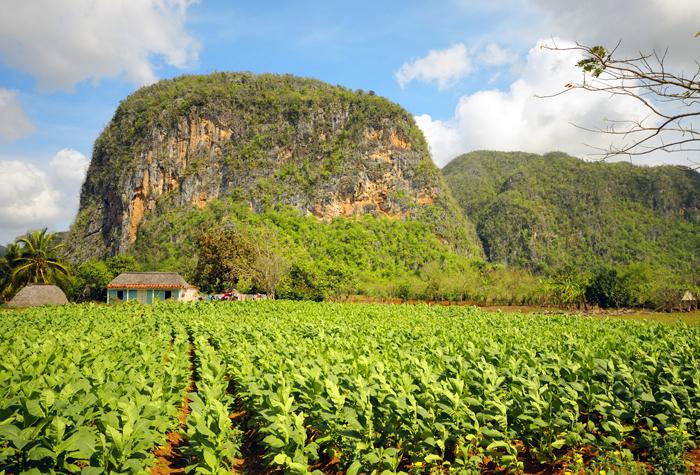 Valle de Vinales campo - Valle de Viñales: donde nace el tabaco