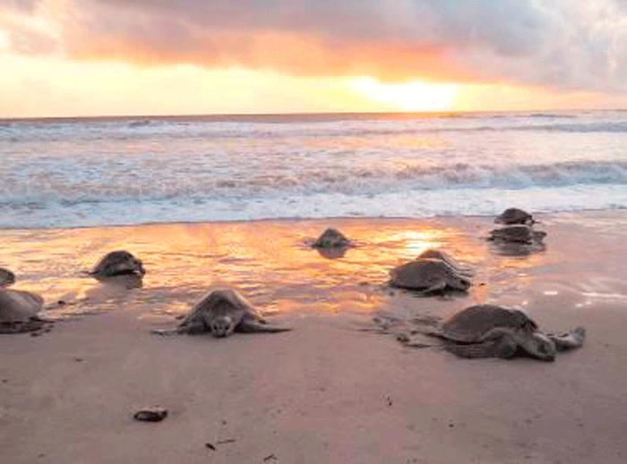 A9R8361 - Las playas más salvajes de Centroamérica