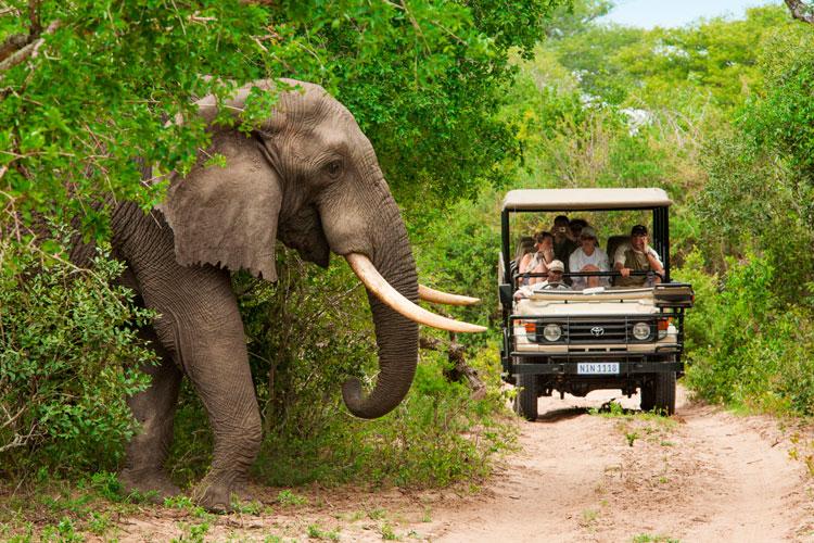 Sudafrica safari 1 - Navidades fuera de lo común: 5 actividades para (re) descubrir Sudáfrica