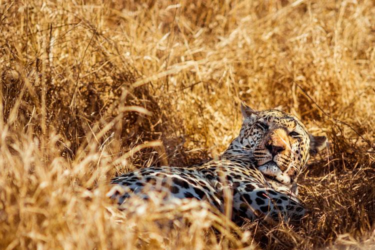 Sudafrica safari 2 - Cinco destinos para disfrutar del auténtico safari en Sudáfrica