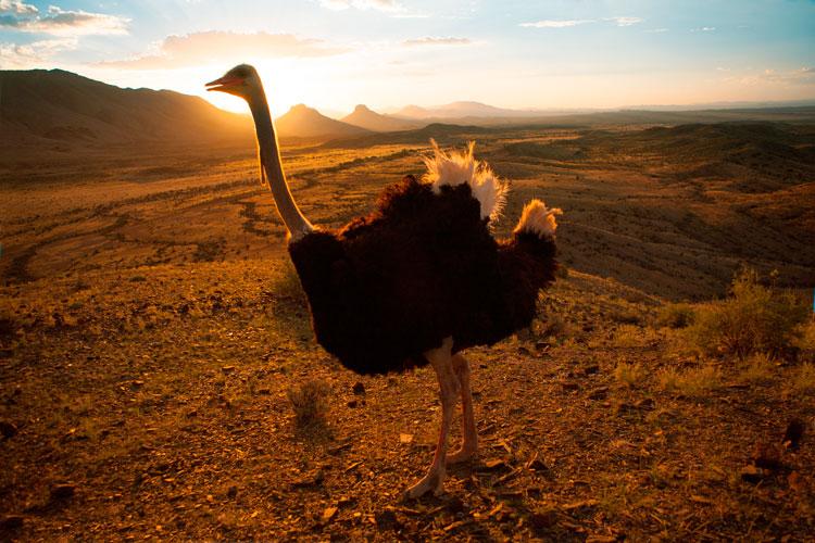 Sudafrica safari 3 - Cinco destinos para disfrutar del auténtico safari en Sudáfrica