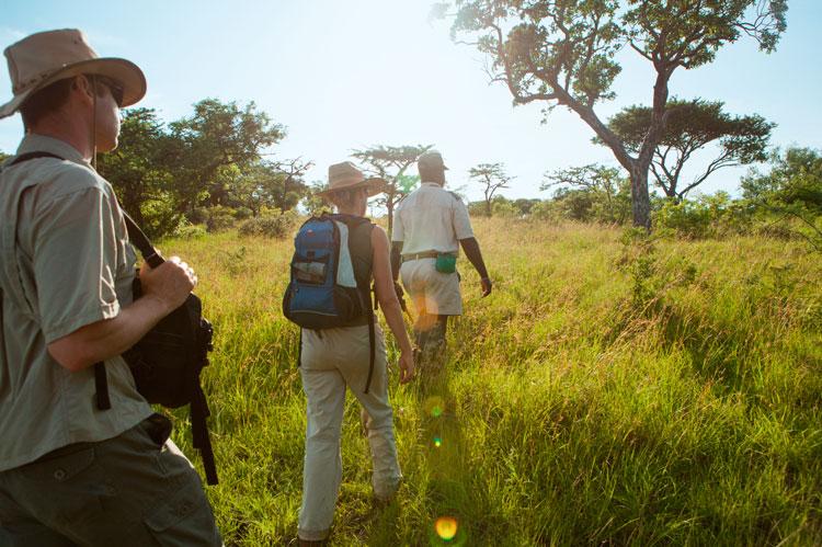 Sudafrica safari 4 - Cinco destinos para disfrutar del auténtico safari en Sudáfrica