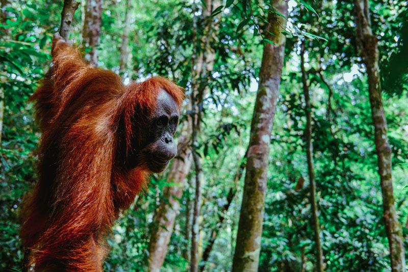 Sumatra Indonesia © Ilya Yakubovich - Conecta con los animales en Isla de Sumatra, Indonesia