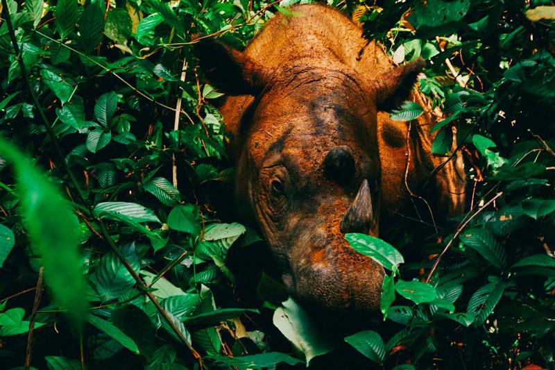 Sumatra Indonesia © Willem v Strien - Conecta con los animales en Isla de Sumatra, Indonesia