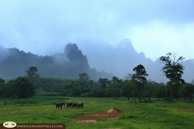 Elephant Hills Khao SokTailandia 2 - Entre colinas de elefantes en Khao Sok, Tailandia