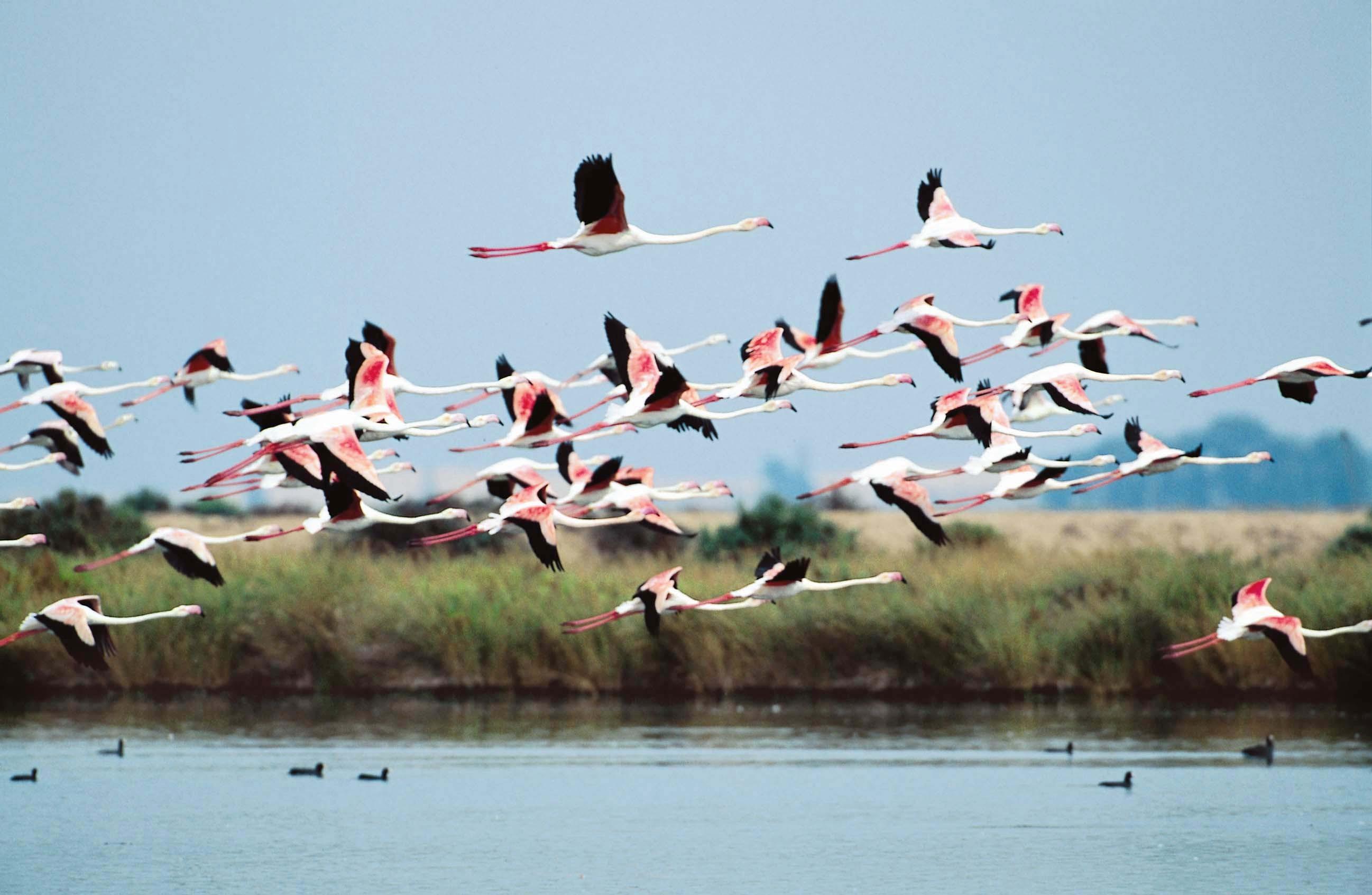 Foto PuertoAntilla Ecoturismo 24052018 1 - Ecoturismo, una forma de descubrir Huelva a través de su naturaleza