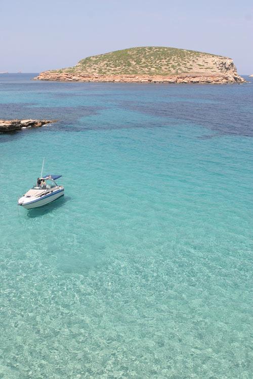 Platges de Comte barco Ibiza - Posidonia oceánica, un tesoro en aguas ibicencas