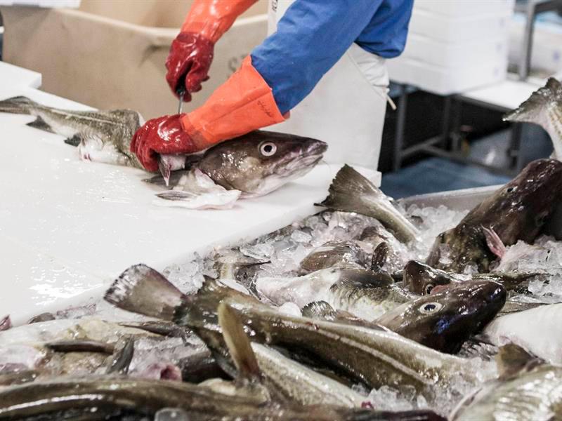 Islandia bacalao - Islandia, wellness y gastronomía en FITUR 2019