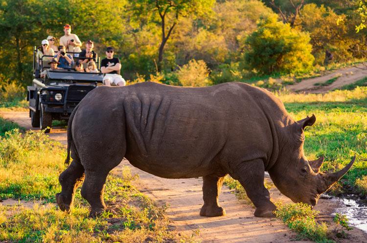 Turismo de Sudáfrica 3 - Viajes de eco-voluntariado en Sudáfrica