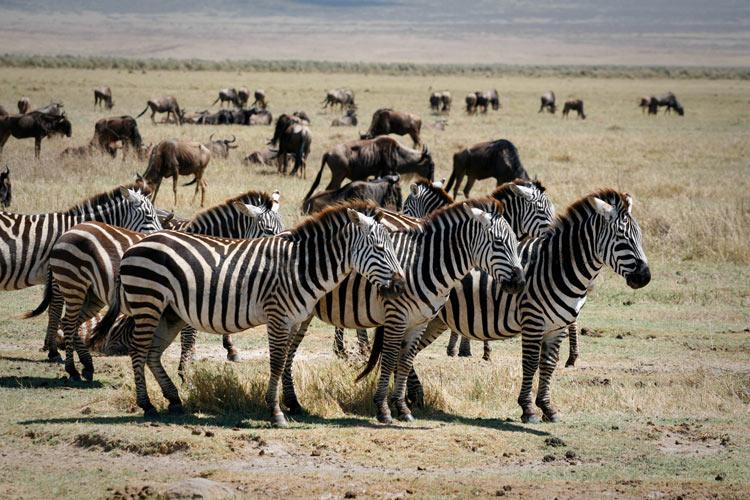 Turismo de Sudáfrica 8 - Viajes de eco-voluntariado en Sudáfrica