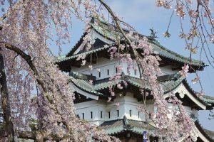 Castillo Hirosaki©JNTO  300x200 - Japón se tiñe de rosa