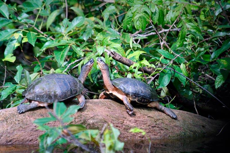 Tortuguero Costa Rica rio tortugas agua - Los enclaves naturales más impresionantes de Centroamérica
