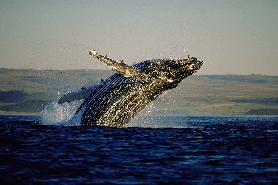 Turismo de Sudáfrica - La Ruta de las ballenas del Cabo, un viaje por la costa sur de Sudáfrica