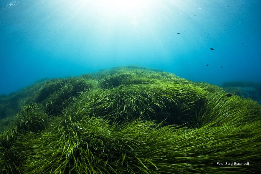 01 Reserva Biosfera - Menorca, un fascinante paraíso natural Reserva de la Biosfera