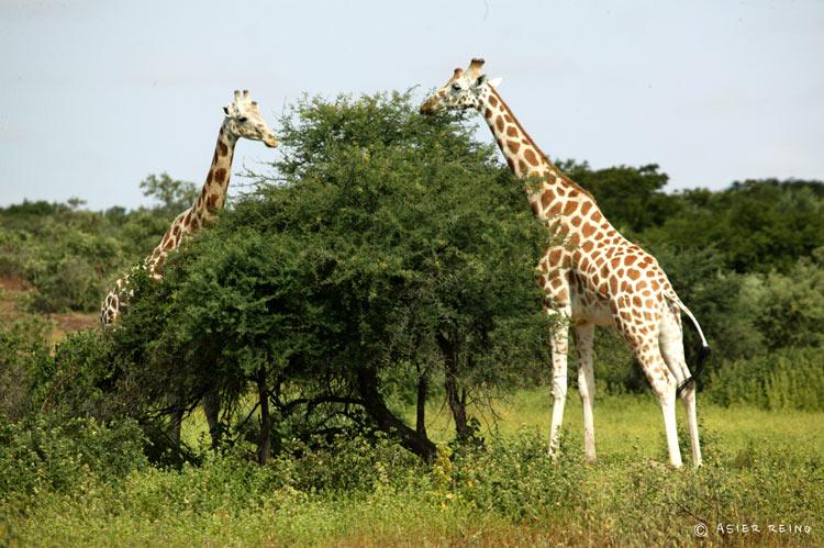 E25W1026 Ruta hacia el Gerewol Niger Tribus del Mundo © Asier Reino - Ruta hacia el Gerewol