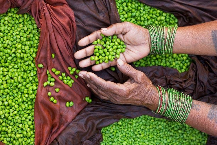 India manos garbanzos verdes © Jorge Royan - ¿Qué alimentos comer para tu tipo de piel?