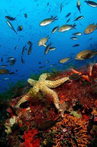 LA BOTA JORGE JIMENEZ 199x300 - Formentera, una aventura bajo el mar