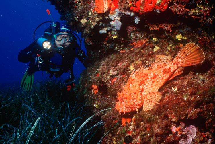 MS 4005 FO Islas Baleares - Islas Baleares, sumérgete en la aventura