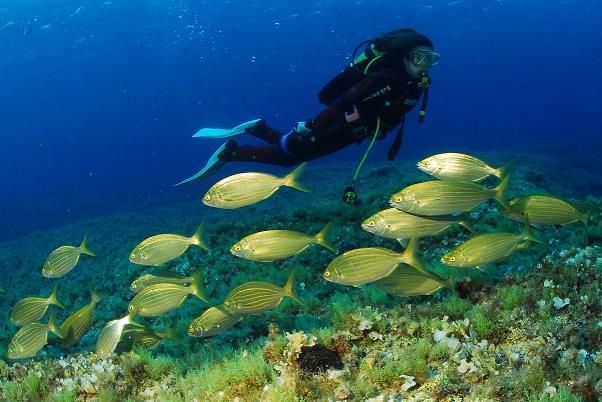 Submarisnimo  Formentera Pedro De Ureta - Formentera, una aventura bajo el mar