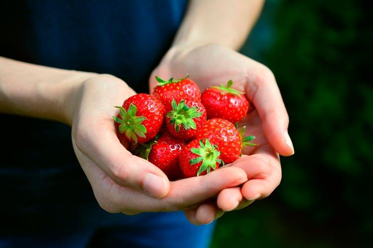 fresas manos © congerdesign - ¿Qué alimentos comer para tu tipo de piel?