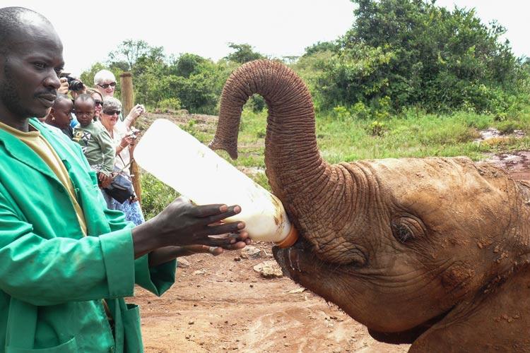 Elefante Orphanage biberon F.A. 2 Nairobi Kenia Africa - La puerta de la mágica Kenia