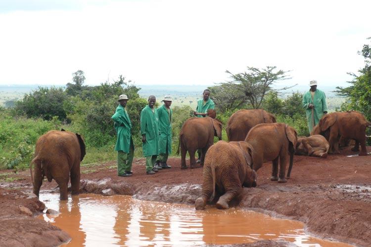 Elephant Orphanage 4 F.A. Nairobi Kenia Africa - La puerta de la mágica Kenia