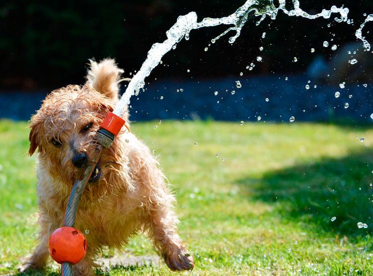 Perro golpe de calor 3 - Cómo evitar que nuestro perro sufra un golpe de calor