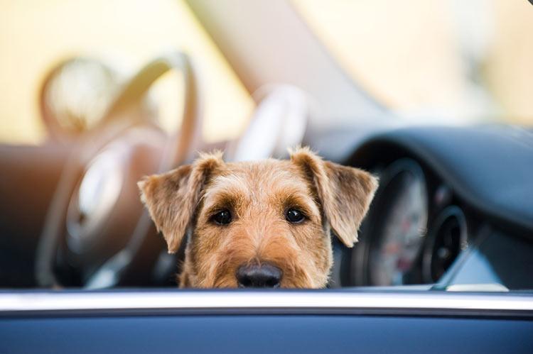 Perro golpe de calor - Cómo evitar que nuestro perro sufra un golpe de calor