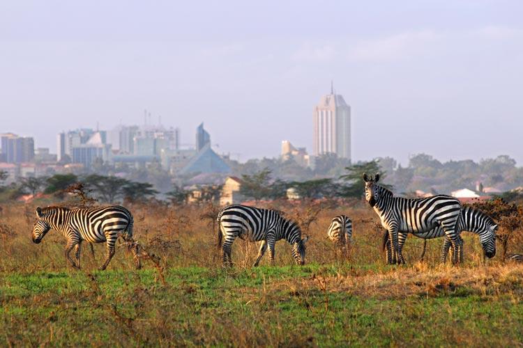 medium Kenya Nairobi 01 Oct2007 Nairobi Kenia Africa - La puerta de la mágica Kenia