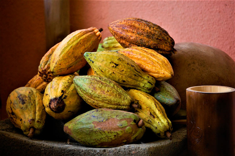 Cacao fruta © Julia Night - El cacao, producto gourmet de República Dominicana