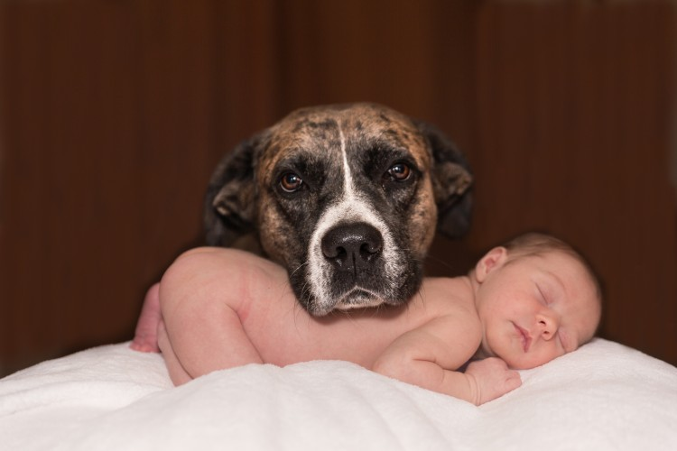 FormatFactoryPerros 3 - Los españoles prefieren los perros a los niños