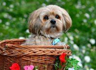 perros-cesta