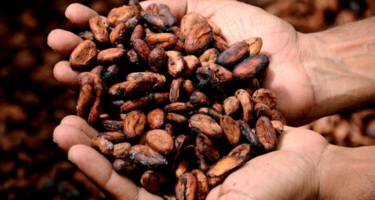 Semillas cacao chocolate © dghchocolatier - El cacao, producto gourmet de República Dominicana