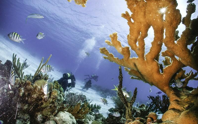 Ciénaga de Zapata buceo corales - Ciénaga de Zapata, Cuba pura biodiversidad en el Caribe insular