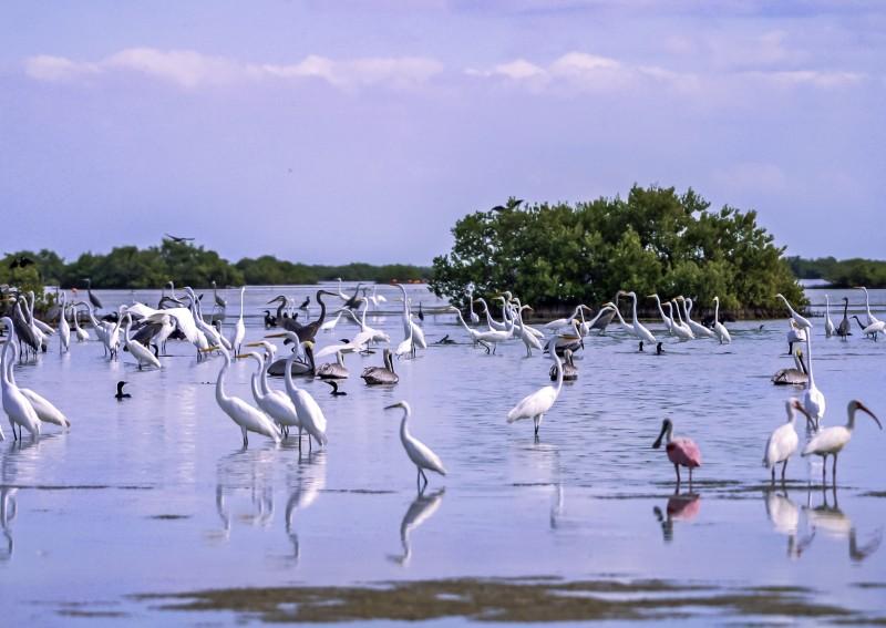 SalinasII aves cienaga de zapata - Ciénaga de Zapata, Cuba pura biodiversidad en el Caribe insular