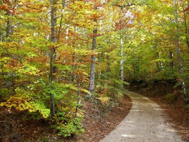 Vía Verde Sierra Demanda otoño bosque camino - Planes en familia para una Navidad inolvidable en la provincia de Burgos