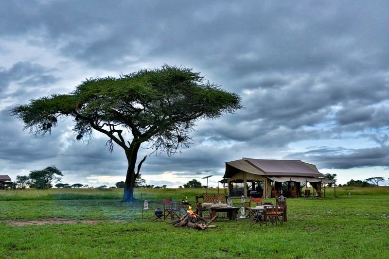 Botswana sabana - Ideas originales y atractivas para dar la bienvenida a 2020 lejos de casa