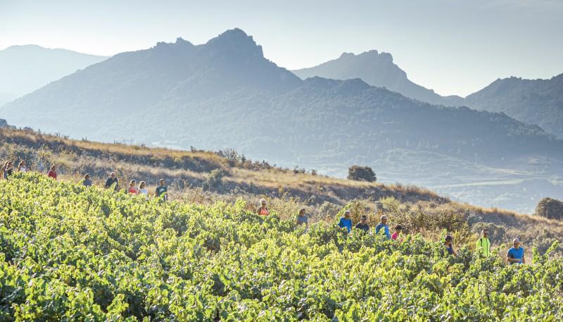 Rioja alavesa camino santiago paisaje montañas - La ruta del vino de Rioja Alavesa sinónimo de naturaleza
