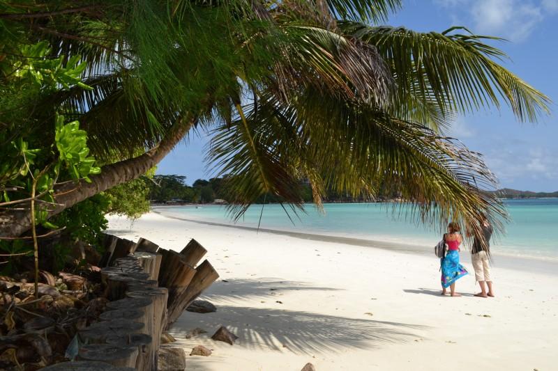seychelles. playa mar cocotero - Seychelles se abre a los turistas el 1 de agosto