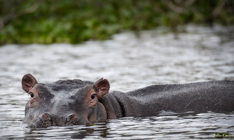 """Kenia el pais de los lagos legendearios MV67 © Julio Castro 17 - Fotos de: """"Kenia, el país de los lagos legendarios""""."""